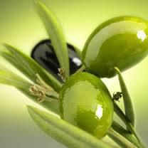 オリーブ果実油